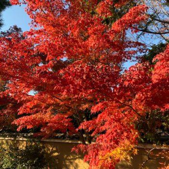 秋・初冬の京都trip(週末利用の短い旅へ) ~下鴨神社・東福寺~